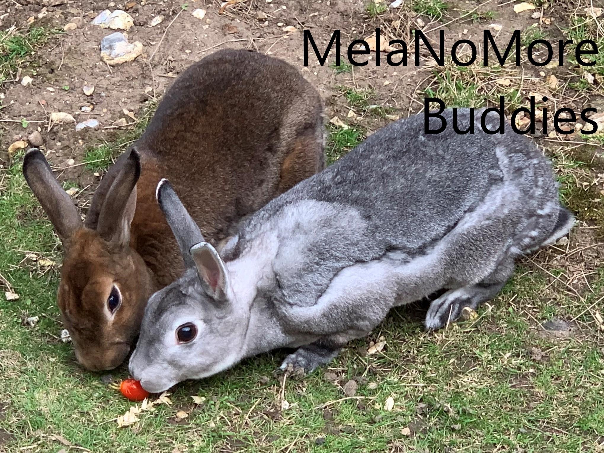 Rabbits Share Tomato